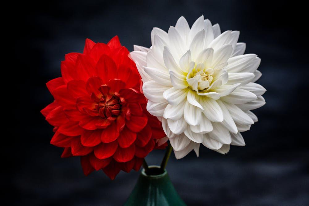 ht florist deko 4