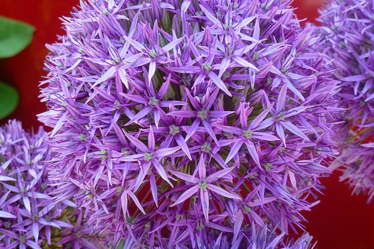 ht florist deko 3